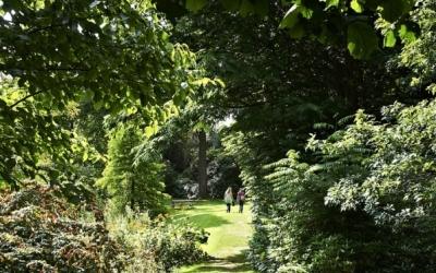 Tree_Path_Large
